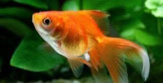 Sonhar com peixe
