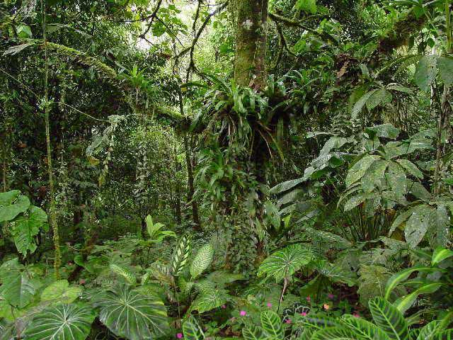 Sonhar com selva