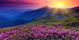 Sonhar com a primavera