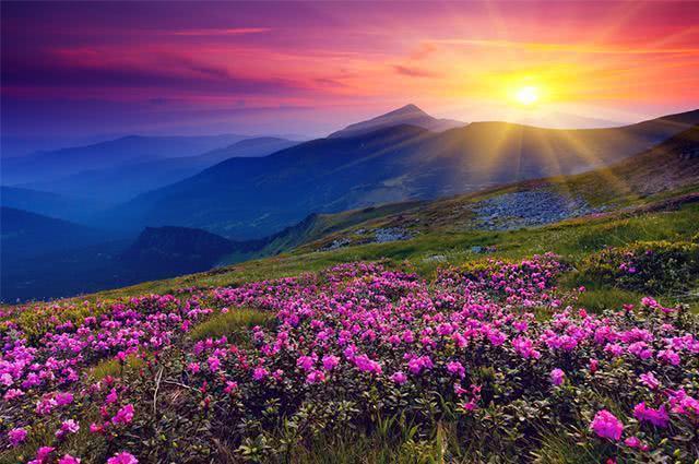 Paisagem florida durante a primavera
