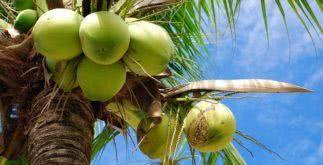 Sonhar com coco (fruta)