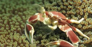 Sonhar com crustáceos