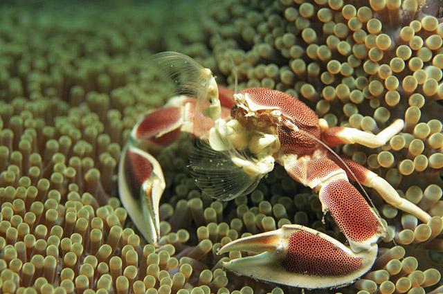 Sonhar com crustáceos pode indicar ganhos, em prêmios ou dinheiro